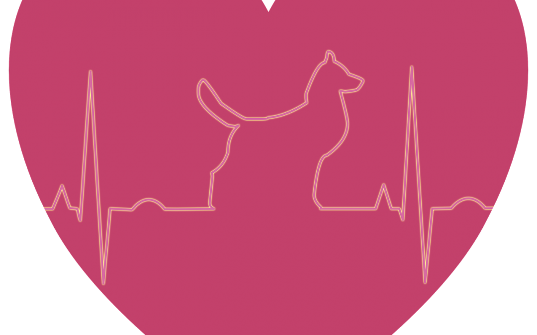 Possible Connection Between Diet and Canine Heart Disease