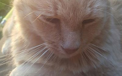 Cats can get Lyme Disease too?? The Curious Case Of Tikki